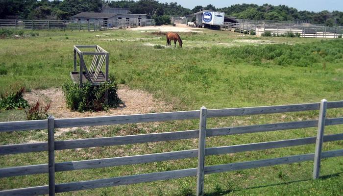 scenic waterside drive obx ocracoke ponies