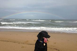 Dog on OBX beach with rainbow over ocean