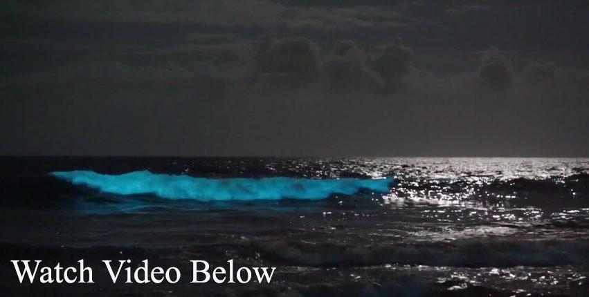 watchvideobelow
