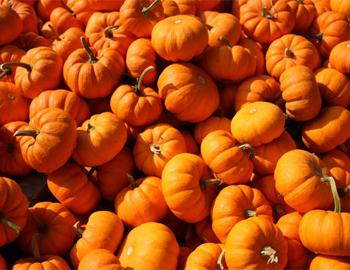 Pumpkin Patch Saturdays at Island Farm