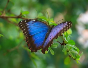 butterfly, elizabethan gardens, festival