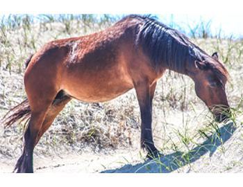 bobs wild horse tours