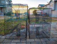Colington Harbour Community Amenities