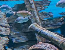 Experience the NC Aquarium on Roanoke Island [Video]