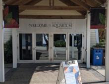 NC Aquarium on Roanoke Island Offers Virtual Programs