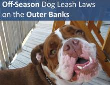 Off-Season Dog Leash Laws on the Outer Banks of North Carolina