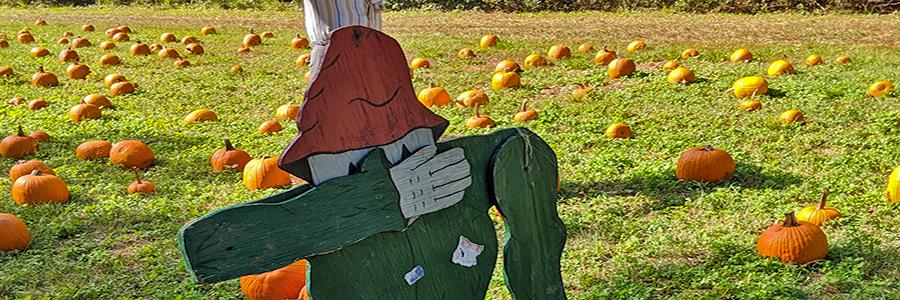 Grandy Pumpkin Patch