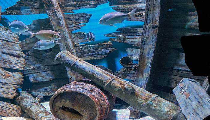 top 10 selfie spots - nc aquarium on roanoke island