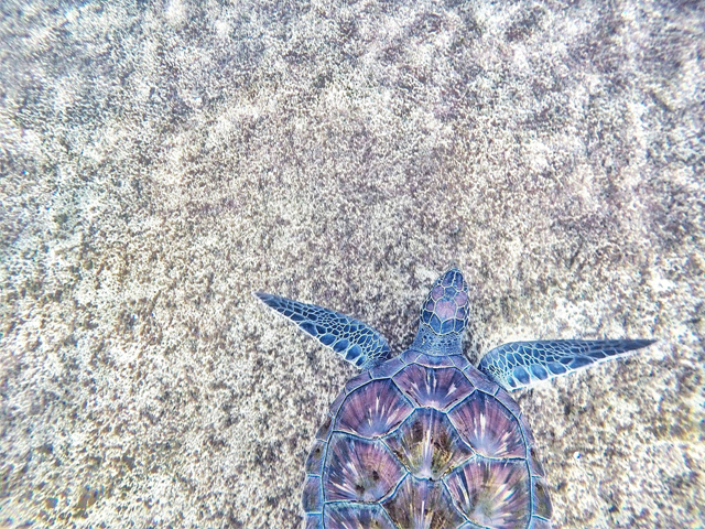 Outer Banks Sea Turtles