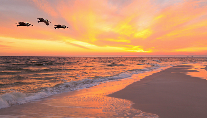 sunset and birds outer banks